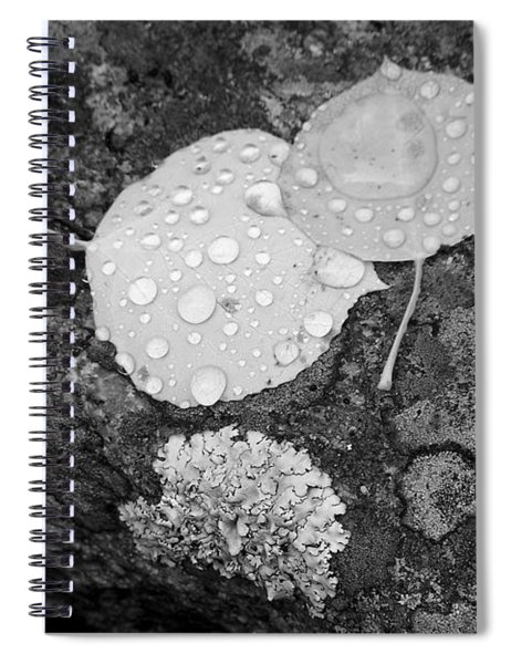 Aspen Leaves In The Rain Spiral Notebook