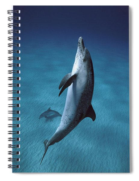 Atlantic Spotted Dolphin  Spiral Notebook by Hiroya Minakuchi