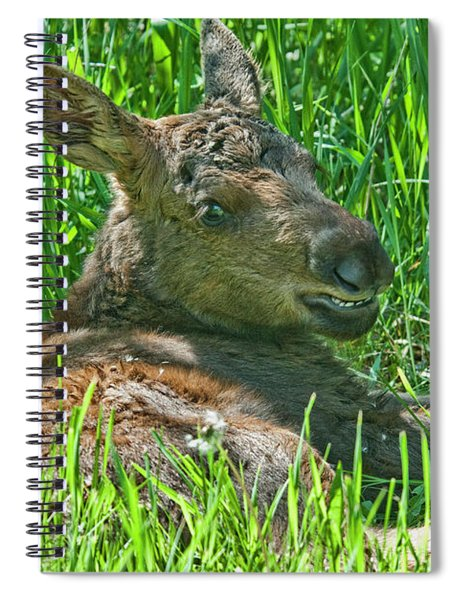 Baby Moose Spiral Notebook