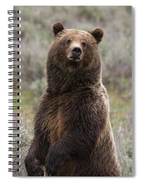 Bear 399 Spiral Notebook