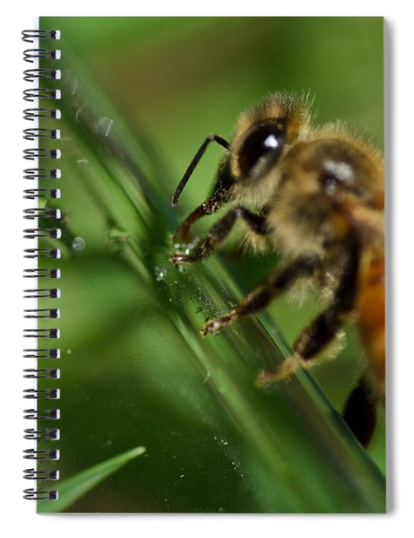 Bee In Green Spiral Notebook