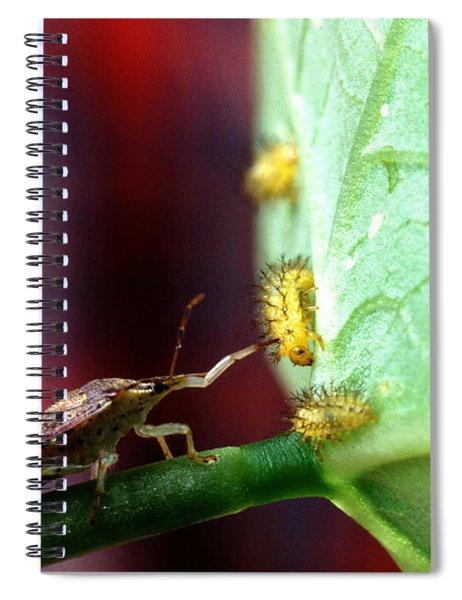 Biocontrol Of Bean Beetle Spiral Notebook