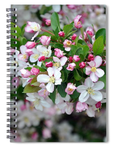 Blossoms On Blossoms Spiral Notebook
