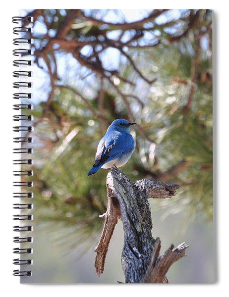 Blue Boy Spiral Notebook
