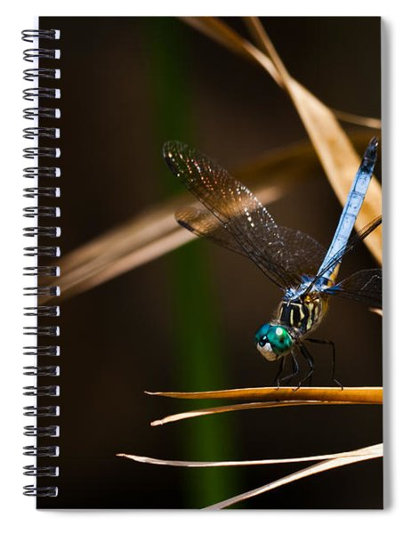 Spiral Notebook featuring the photograph Blue Dasher Dragonfly by Ed Gleichman