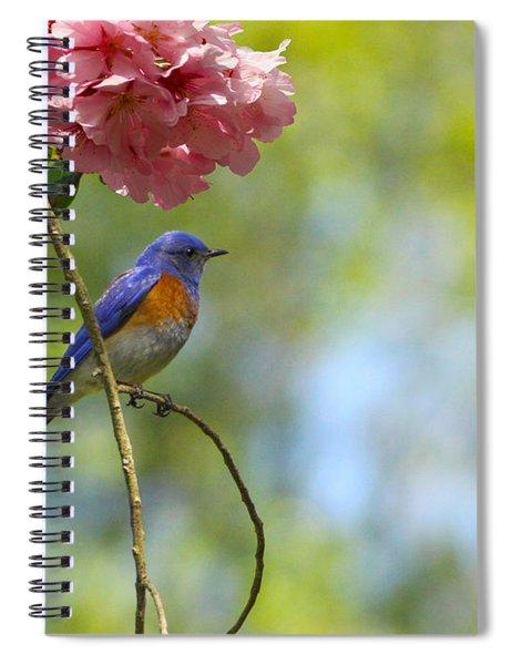 Bluebird In Cherry Tree Spiral Notebook