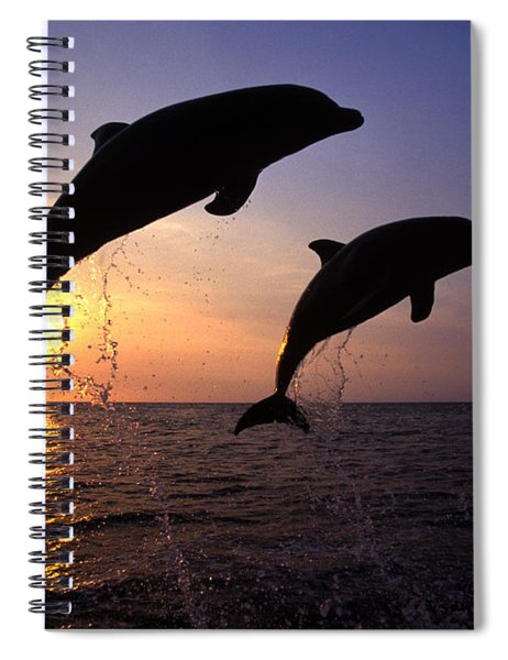 Bottlenose Dolphins Spiral Notebook