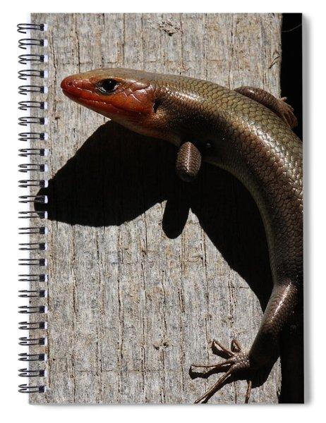 Broad-headed Skink On Barn  Spiral Notebook