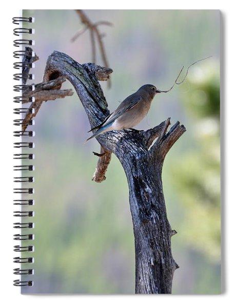 Building Her Nest Spiral Notebook