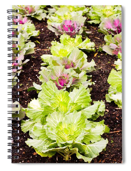 Cabbages Spiral Notebook