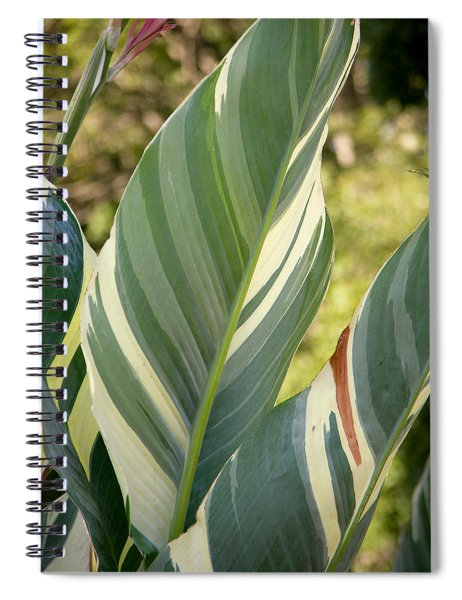 Spiral Notebook featuring the photograph Canna 'stuttgart' 2019 by Brian Gryphon