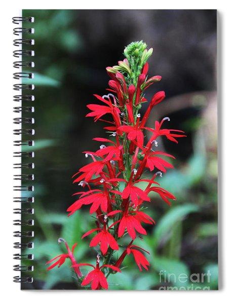 Cardinal Flower Spiral Notebook