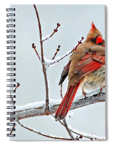 Cardinal I The Snow  Spiral Notebook