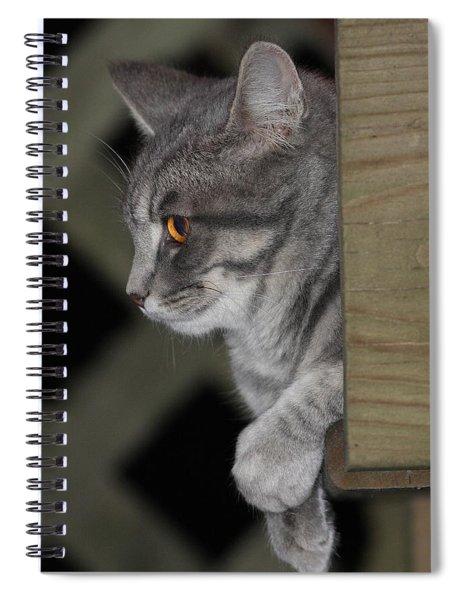 Cat On Steps Spiral Notebook