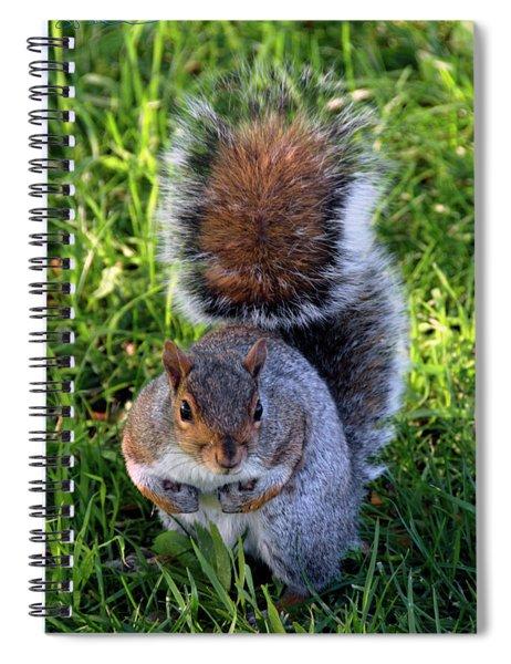 City Squirrel Spiral Notebook
