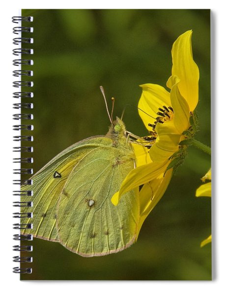 Clouded Sulphur Butterfly Din099 Spiral Notebook