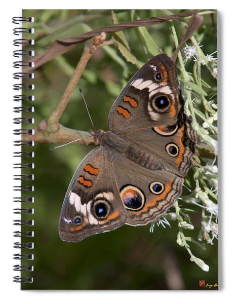 Common Buckeye Butterfly Din182 Spiral Notebook