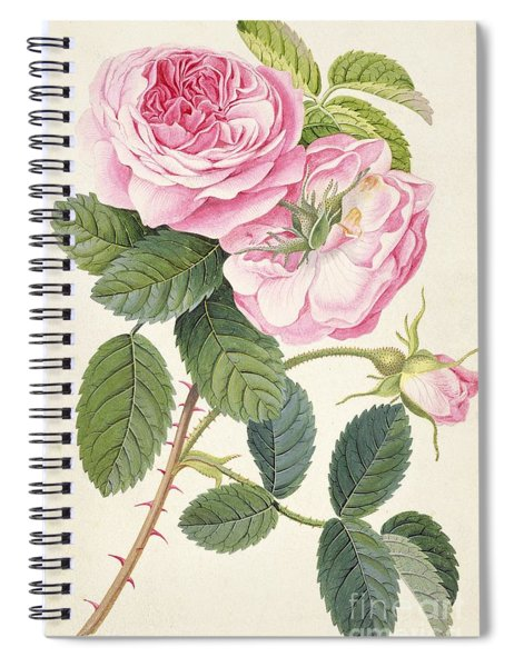 Common Provence Rose Spiral Notebook