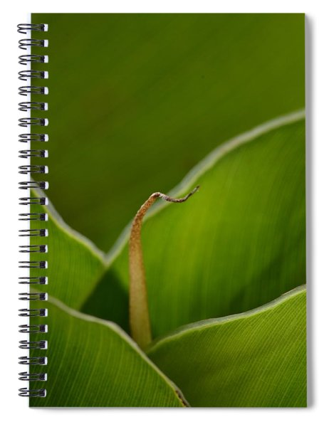 Curled Spiral Notebook