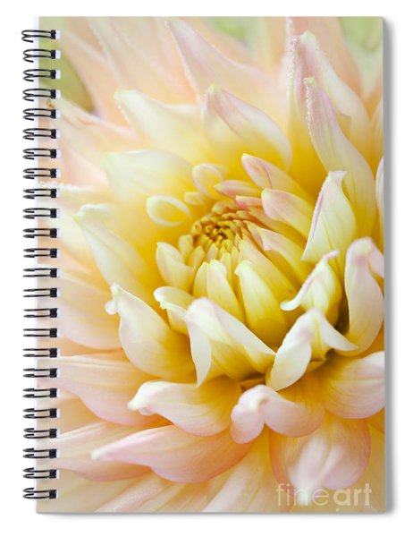 Dahlia Flower 03 Spiral Notebook