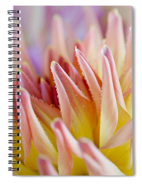 Dahlia Flower 05 Spiral Notebook