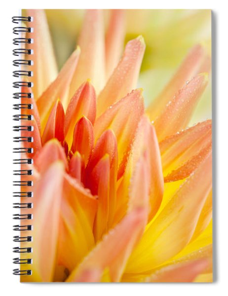 Dahlia Flower 06 Spiral Notebook