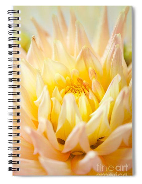 Dahlia Flower 10 Spiral Notebook
