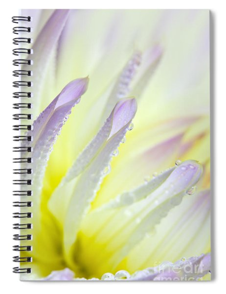 Dahlia Flower 11 Spiral Notebook