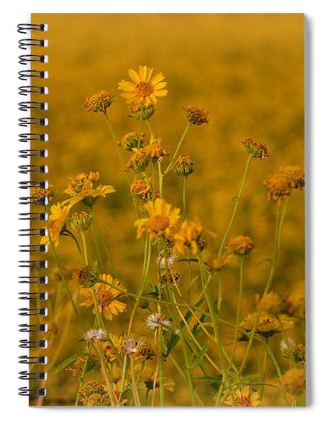 Daisy's Spiral Notebook