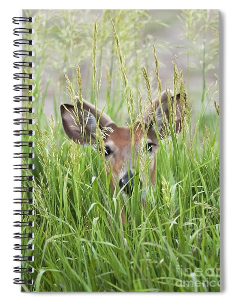 Deer In Hiding Spiral Notebook