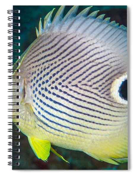 Dont Eyeball Me Spiral Notebook