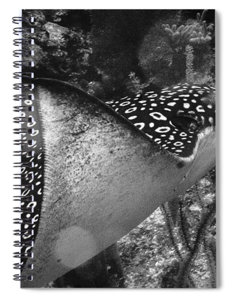Eagle Ray Spiral Notebook