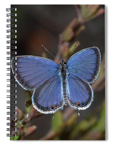 Eastern Tailed Blue Butterfly Spiral Notebook