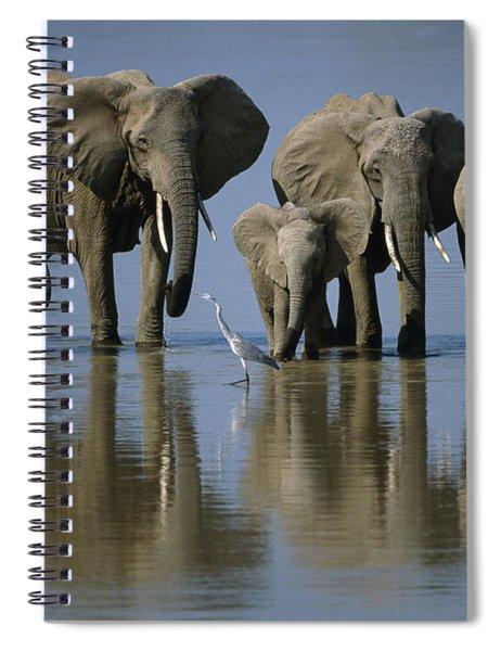 Elephants Spiral Notebook