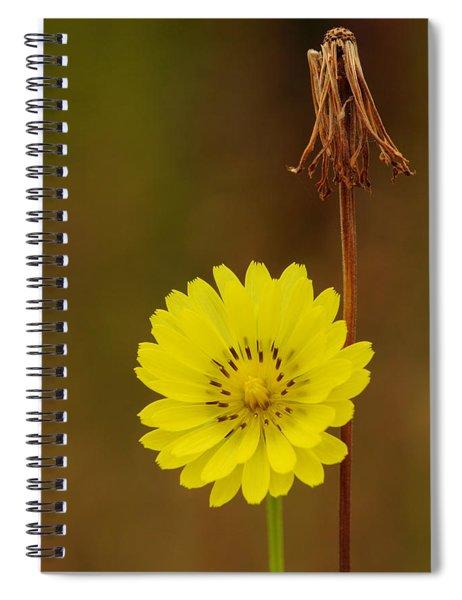 False Dandelion Flower With Wilted Fruit Spiral Notebook