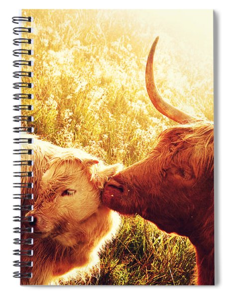 Fenella With Her Daughter. Highland Cows. Scotland Spiral Notebook