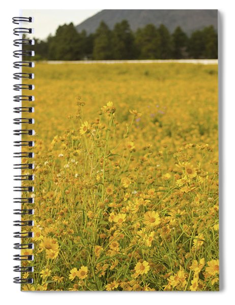 Field Of Yellow Daisy's Spiral Notebook