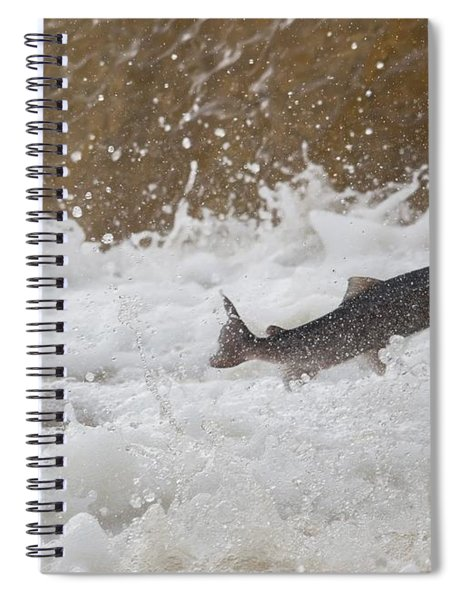 Fish Jumping Upstream In The Water Spiral Notebook