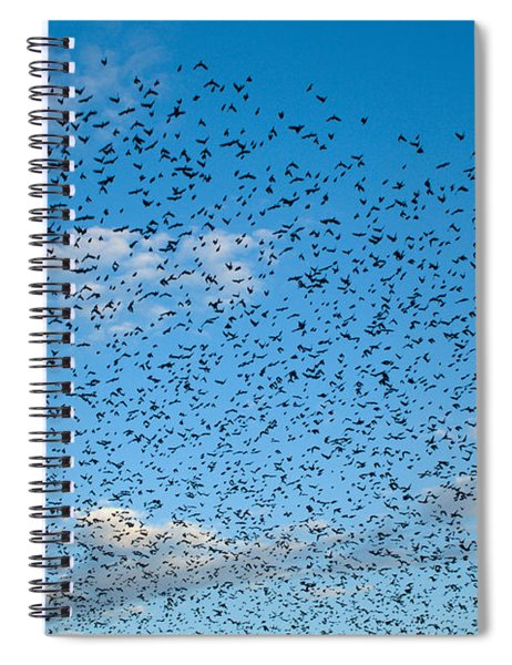 Flock Of Cowbirds Molothrus Ater Spiral Notebook