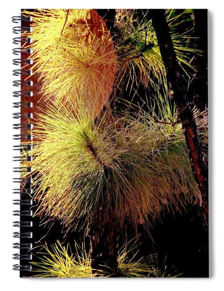 Florida Tree Spiral Notebook
