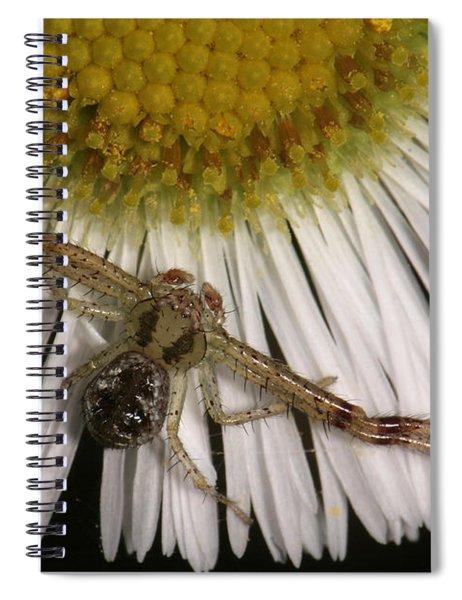 Flower Spider On Fleabane Spiral Notebook