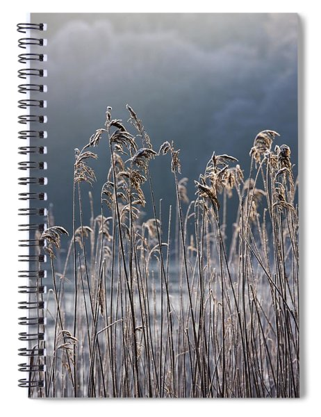 Frozen Reeds At The Shore Of A Lake Spiral Notebook
