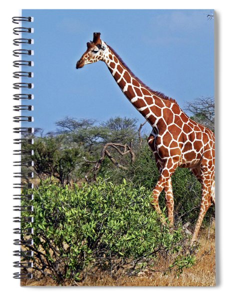 Giraffe Against Blue Sky Spiral Notebook