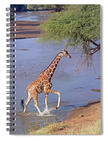 Giraffe Crossing Stream Spiral Notebook