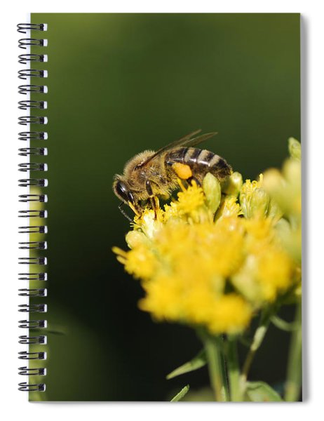 Golden Moment Spiral Notebook