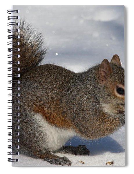 Gray Squirrel On Snow Spiral Notebook