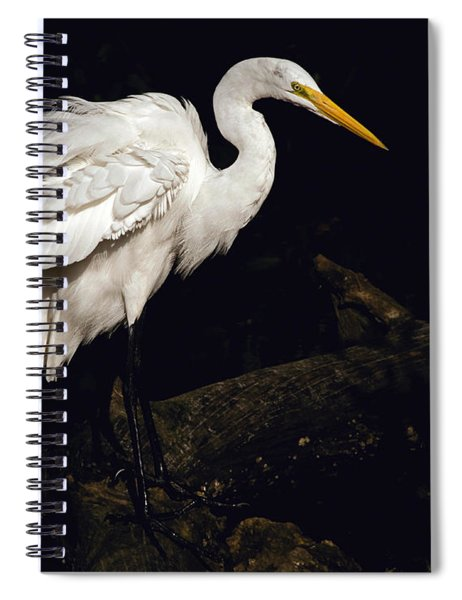 Great Egret Ruffles His Feathers Spiral Notebook