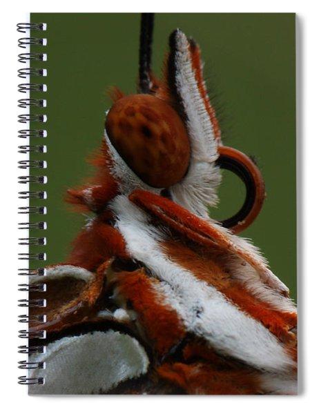 Gulf Fritillary Butterfly Portrait Spiral Notebook
