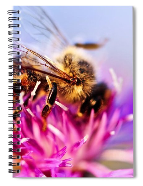 Honey Bee  Spiral Notebook