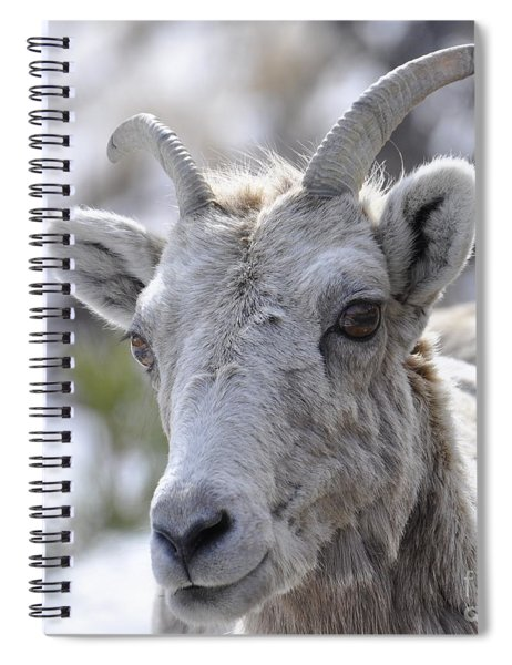 How Close Is Too Close Spiral Notebook